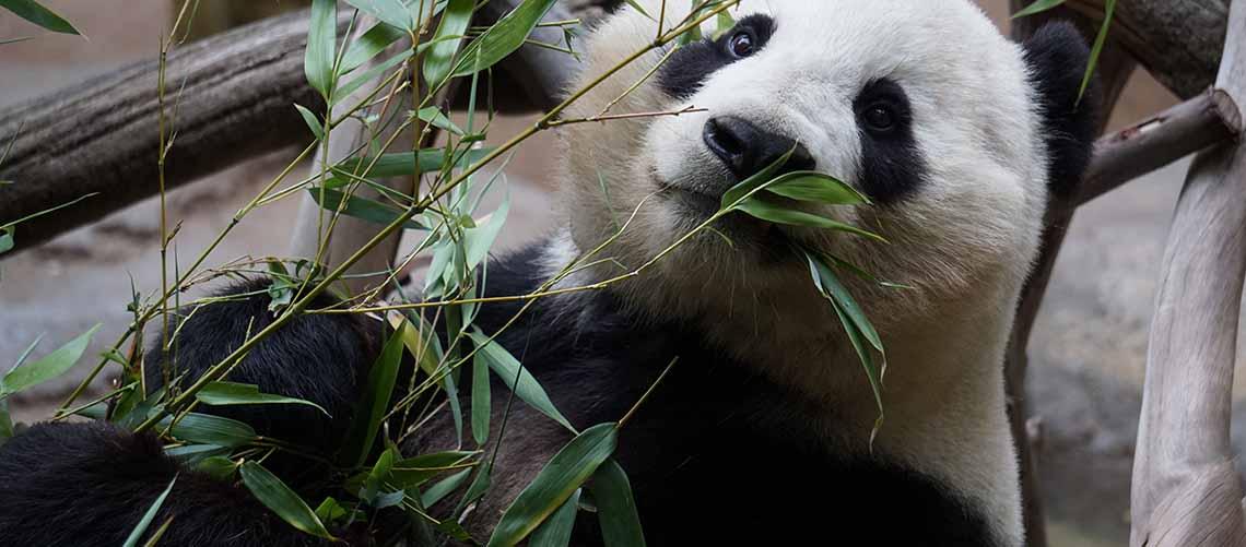 Bambustøj er for de miljøbevidste